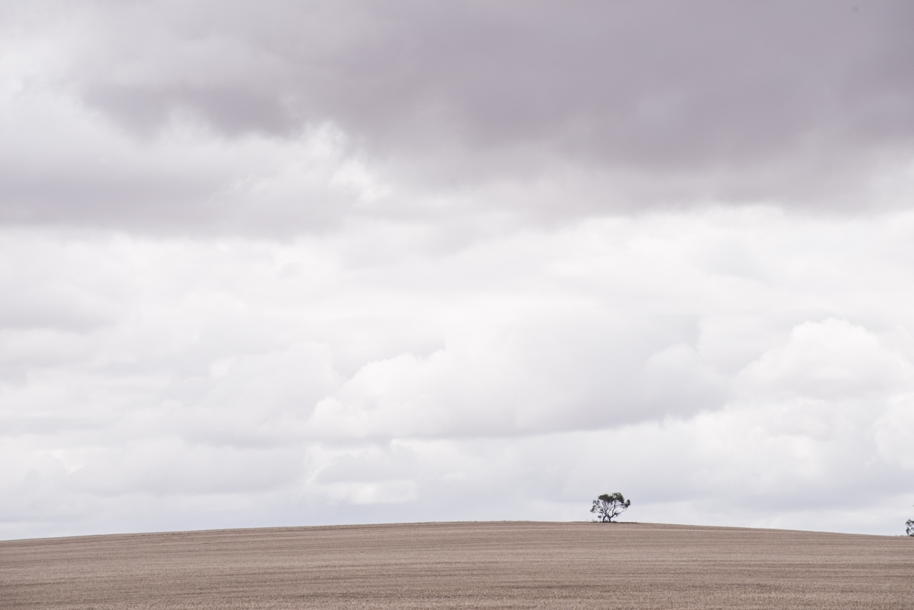 Solitary tree on a hill